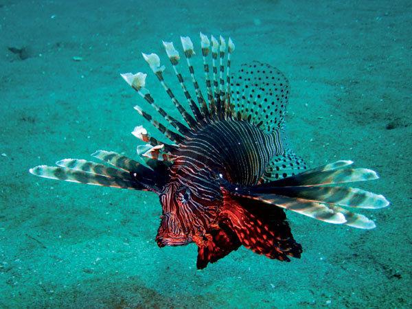 Plongee1.jpg