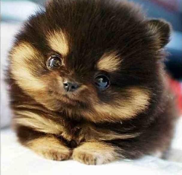 chien mignon.jpg