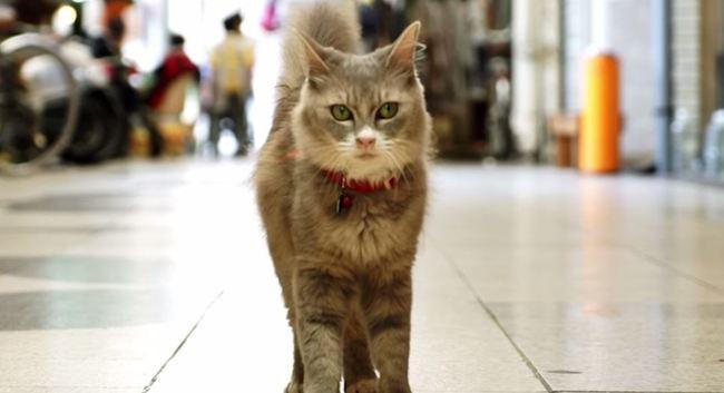 cat street view.JPG