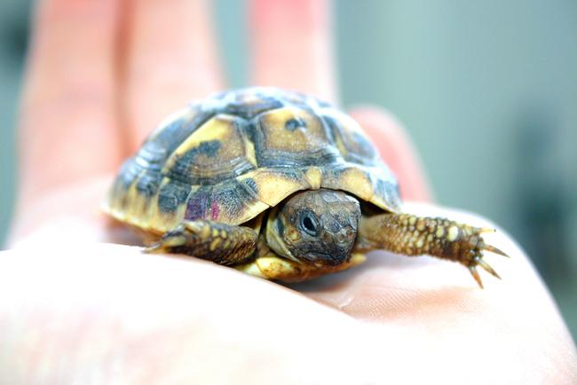 turtle-1-1399872-1919x1279.jpg