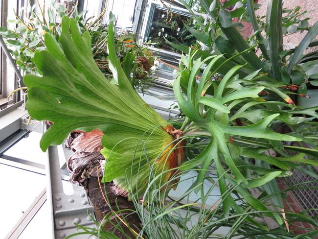 Plante-100.JPG