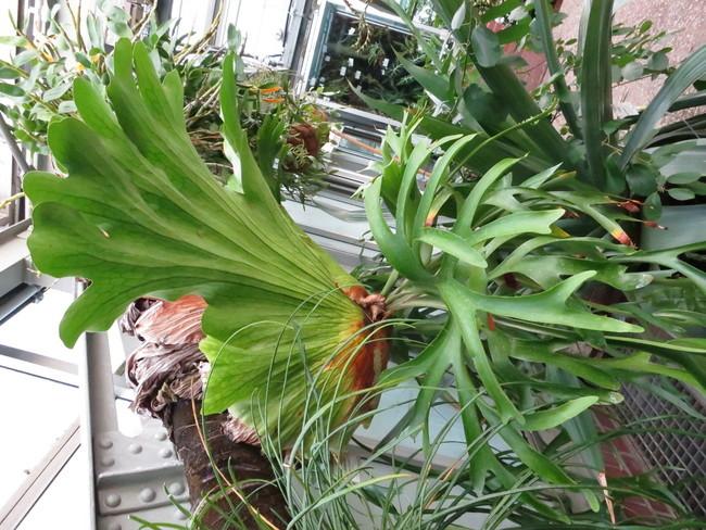 Plante-3200.JPG