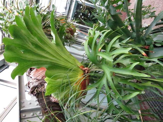 Plante-6400.JPG