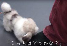 Chien robot Hana-chan