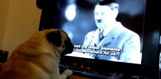 YouTube : un Écossais condamné pour avoir appris le salut nazi à son chien