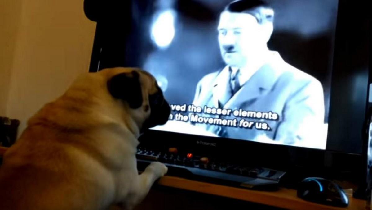Un YouTubeur écossais condamné pour avoir appris le salut nazi à son chien